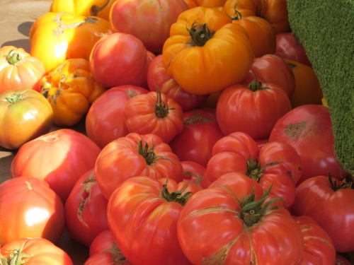 Abundance of heirloom tomatoes